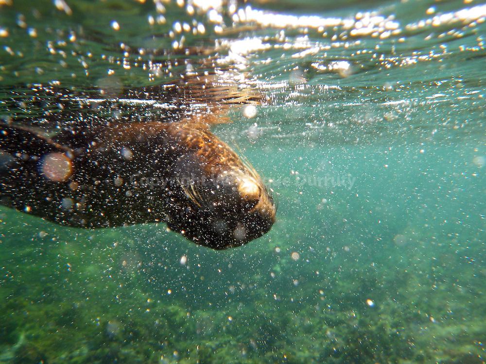 Galapagos islands underwater