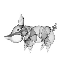X-ray image of a pig (black on white) by Jim Wehtje, specialist in x-ray art and design images.