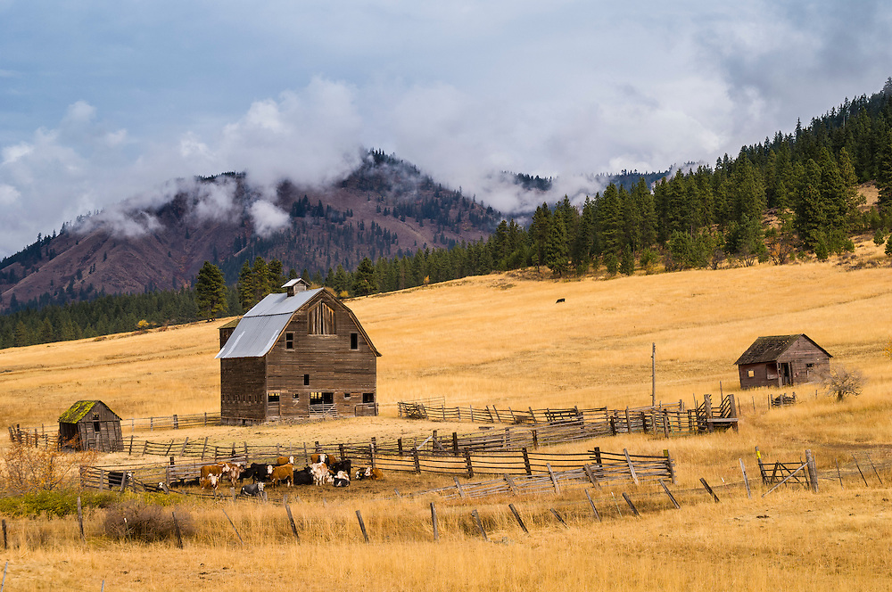 Barn, cattle and ranch along Highway 97 north of Ellensburg in central Washington.