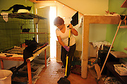 SUN-STAR PHOTO BY BEA AHBECK<br /> 8:03 a.m. Renate continues cleaning one of the cats' rooms at the Last Hope Cat Kingdom in Atwater, Calif. Aug. 18, 2010. All of the rooms are painted in different colors and decorated with paintings and plenty of cat furniture for lounging and playing.