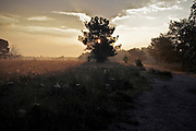 sun coming through tree early morning heath landscape Holland
