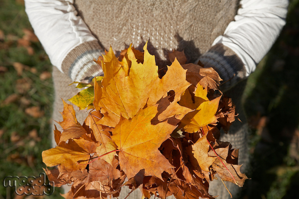 Person holding pile of autumn leaves mid section