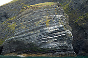 Seabird colonies and layers of sedimentary rock in Pembrokeshire, Wales, UK