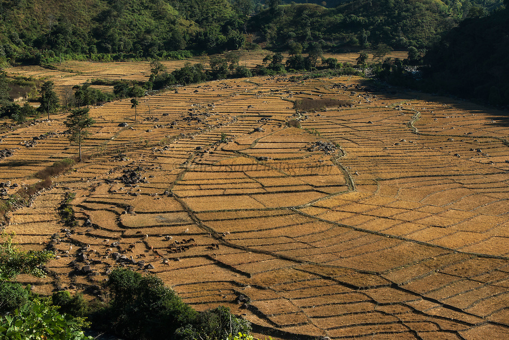 Nyshi rice paddies<br /> Yazali Village<br /> Nyshi Tribe<br /> Arunachal Pradesh<br /> North East India