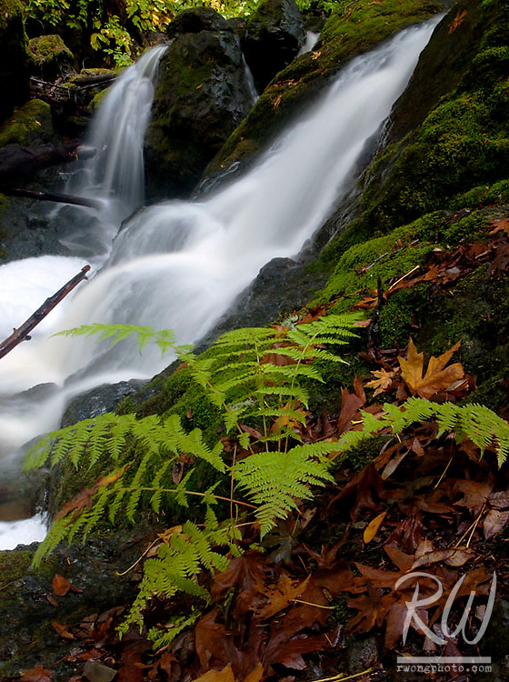 Fern and Cataract Falls, Marin Municipal Water District, California