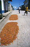Secado de Cacao en la calle del pueblo. Después de fermentados, los granos son colocados al sol por unos cuatro o cinco días, tiempo en que se ponen rojizos u oscuros. Cabe destacar que para la elaboración del chocolate son indispensables las semillas de cacao. San Juan de las Galdonas. 2002 (Ramón Lepage / Orinoquiaphoto)  Dried Process of Cocoa in the streets of a small town. After fermented, the grains are placed to the Sun for approximately four or five days, time in which they become reddish or dark. It's necessary to emphasize that for the elaboration of the chocolate the cocoa's seeds  are indispensable. San Juan de las Galdonas. 2002. (Ramon Lepage / Orinoquiaphoto)