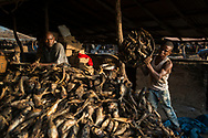 Piles of smoked fish are extracted from the fish smoking operations on the beach in the Casamace region of Senegal. Thousands of tons of fish are smoked, salted, dried and exported throughout the region every year, playing a crucial role in the local economy. The coastal zone of Casmance is home to one of Africa's most important mangrove wetlands. The cutting of wood to feed the fish smoking operations as well as the effects of climate change on the local ecosystem have severely affected the mangroves and the forests of the region. Kafountine, Senegal. 08/11/2014.