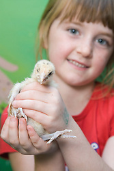 Young girl holding up a baby chick,