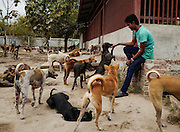 One of the employed caretakers watches over the dogs at the Yangon Animal Shelter.