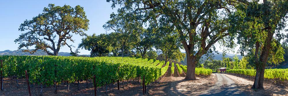Napa Valley Vineyard Lane