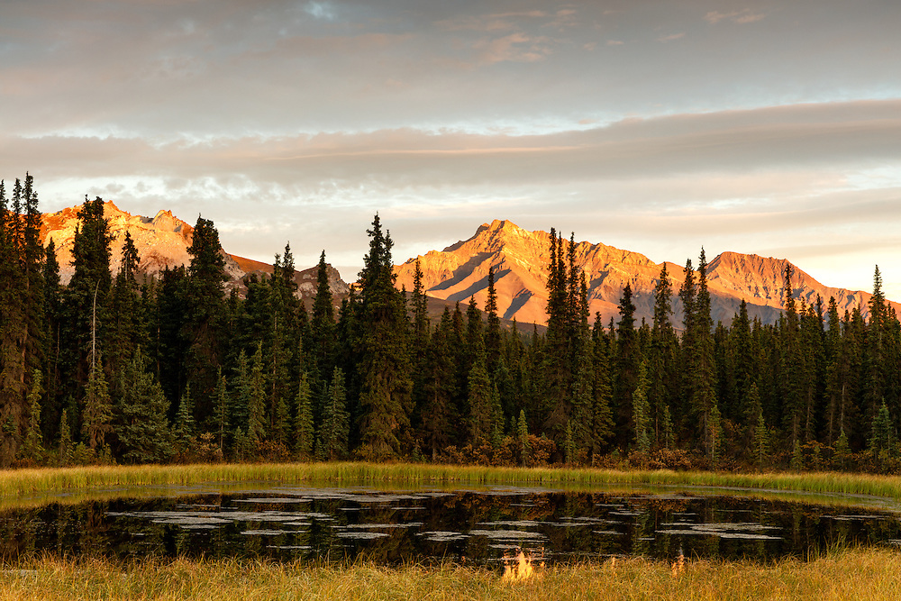 Alpenglow on Alaska Range mountains provides a backdrop to a pond near Teklanika in Denali National Park in Interior Alaska. Autumn. Evening.