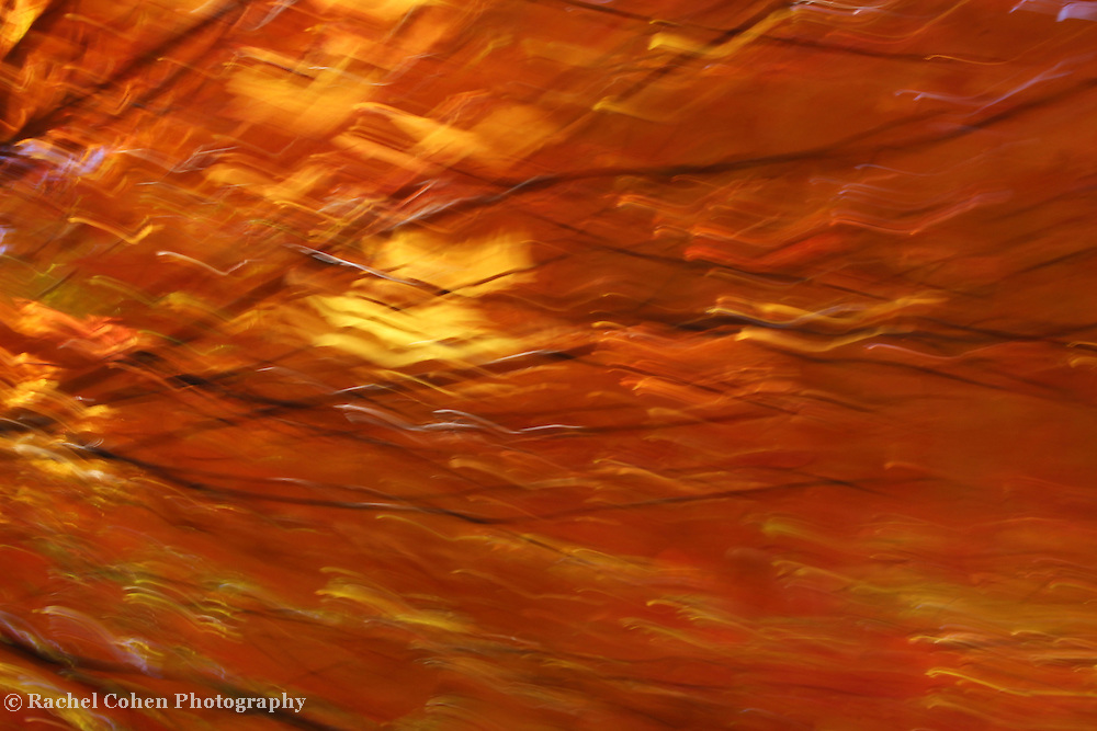 &quot;Light of Autumn's Past&quot;<br />