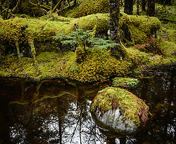 Moss covers the forest floor along the Trail of Time Trail near the Mendenhall Lake and Mendhenall Visitor Center just outside Juneau, Alaska.