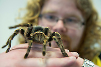 """Micheal English with a giant Stag Beattle at the """"undergrad"""" Science Fair in NUIG. Photo:Andrew Downes"""