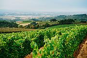 Erath Vineyards overlooking the Willamette Valley