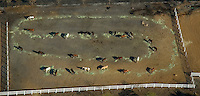 Aerial view of Horses in paddock that survived the Fires<br /> Harris County, San Diego Fires, California