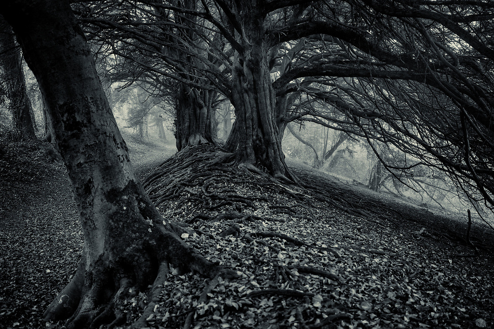 An old footpath with ancient yew trees in Hampshire, England