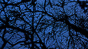 Silhouetted branches in the evening sky.