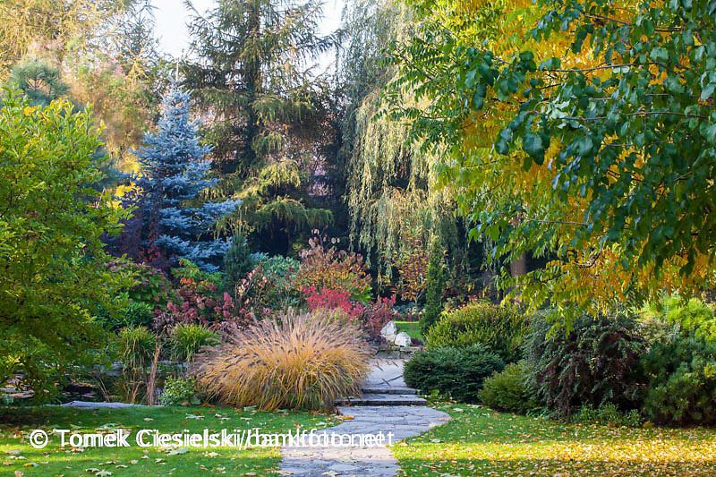 View for autumn garden.