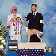 Italian Greyhound Club of America 05/23/2019