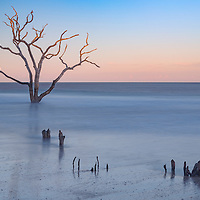 Last of sunlight shines on tree branches. Boneyard Beach, Botany Bay on Edisto Island, SC