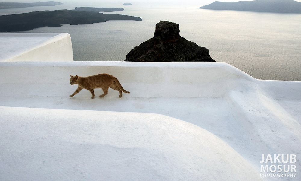 A cat walks on the roof of home in the town of Thira on the island of Santorini, Greece on October 16, 2002.  Photo by Jakub Mosur