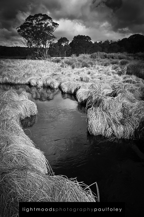 Stream, Barrington Tops, NSW, Australia