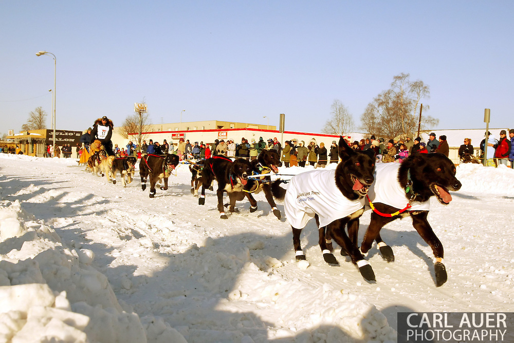 3/3/2007:  Anchorage Alaska -  12 dogs pull Rookie Gerry Willomitzer of Whitehorse, Yukon Territory CANADA down the streets of Anchorage during the Ceremonial Start of the 35th Iditarod Sled Dog Race