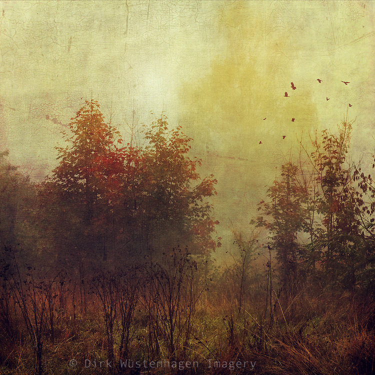 View of a meadow with weeds and trees on a misty fall morning - textured photograph<br /> Redbubble Products: http://www.redbubble.com/people/dyrkwyst/works/19360082-fall-rust<br /> <br /> Society6 Products:<br /> http://society6.com/product/fall-rust_print#1=45