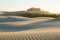 Tahkenitch Dunes, Oregon Dunes National Recreation Area near Florence, Oregon.