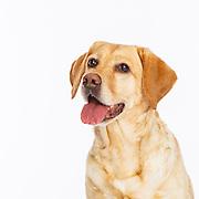 20180204 Susan Dogs I