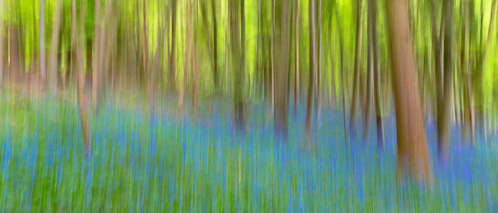 Bluebell wood in The Cotswolds, UK