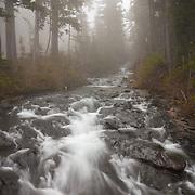 Paradise River near Narada Falls - Mt. Rainier National Park, WA