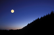 DEU, Germany, Bergisches Land region, forest and moon.....DEU, Deutschland, Bergisches Land, Wald und Mond...