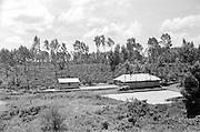 Coffee Plantation, Nairobi, Kenya, Africa, 1937
