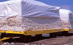 Cotton Stacked on Flatbed Agriculture
