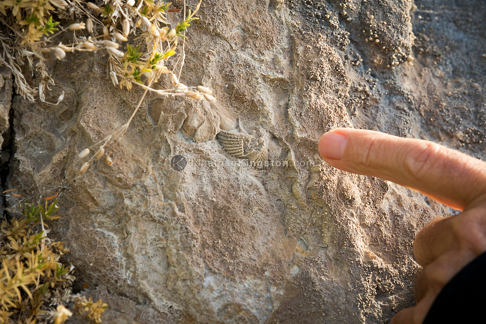 A finger points to a brachiopod encased in limestone near Kake, Alaska.