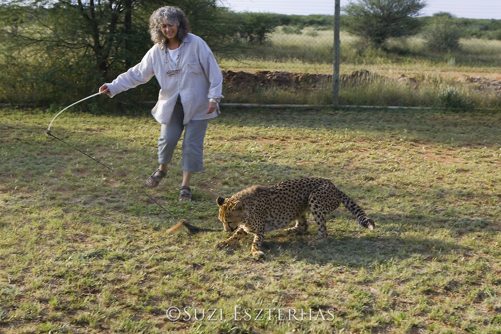 Dr. Laurie Marker exercising an orphan cheetah named Kanini<br /> Cheetah Conservation Fund, Namibia<br /> *Captive
