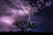 Thunderstorm and juniper tree, Cajon Mesa, Colorado.