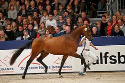 418, Kameraad<br /> KWPN Stallionshow - 's Hertogenbosch 2018<br /> © Hippo Foto - Dirk Caremans<br /> 03/02/2018