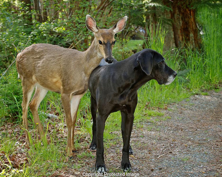 pip and kate 2010, Courtenay, British Columbia, British Columbia, Canada, Photographer - Isobel Springett