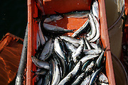 close up of fresh fish in box