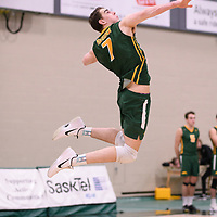 2nd year Right-Side hitter Matthew Aubrey (7) of the Regina Cougars in action during Men's Volleyball home game on January 12 at Centre for Kinesiology, Health and Sport. Credit: /Arthur Images 2018