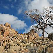 Desert Oak Large Rock Hill Wide View