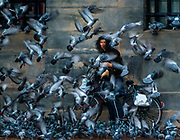 Pigeon Plethora - In the main square of Amsterdam, a lone person feeding the pigeons soon attracts them all, and is completely taken over by the mob. After hiding her face in safety, a quick look up is inevitable, and fleeting.<br /> <br /> f 7.1 @ 1/80 s, 3200 ISO<br /> 28.0-300.0 mm f/3.5-5.6 at 300 mm on NIKON D750