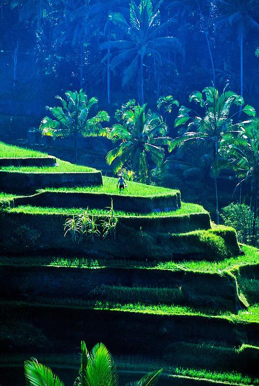 Rice Terraces near Sebatu, Bali, Indonesia