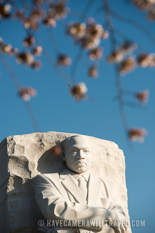 Cherry blossoms (in the foreground, blurred) hang in front of the statue of MLK at the Martin Luther King Jr Memorial on the banks of the Tidal Basin in Washington DC.