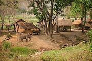 Patara Elephant Farm; Chiang Mai Province; Thailand.