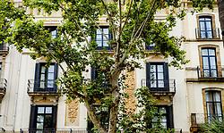 Plaça del Duc de Medinaceli, Barcelona, Catalonia, Spain<br /> <br /> (c) Andrew Wilson | Edinburgh Elite media