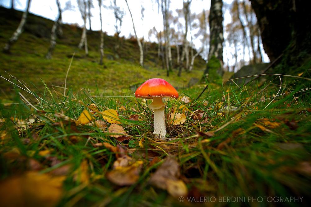 Padley Gorge .Peak District .Grindleford - UK